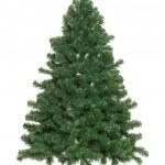 Undecorated Christmas tree — Stock Photo