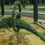 Zierpflanzen — Stockfoto