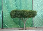 Ornamental tree — Stock Photo