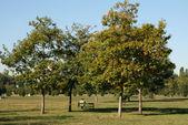 Park w bukareszcie — Zdjęcie stockowe
