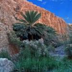 Oasis of Nefta, Chebika — Stock Photo