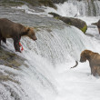 Grizzly Bears fishing in Katmai National Park in Alaska — Foto de Stock