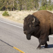 American Bison crossing the road in Yelowstone National Park — Stock Photo