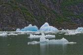 北ソーヤー氷河アラスカのトレーシー アームの氷山 — ストック写真