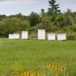 Stock Photo: Honey bee hive boxes