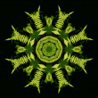 Fern fronds kaleidoscope — Stock Photo