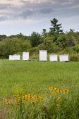 Honey bee hive boxes — Stock Photo