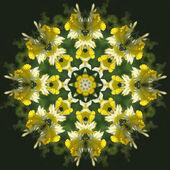 Daffodil Kaleidoscope — Stock Photo