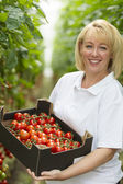Blond woman forty years old working in a greenhouse — Stock Photo