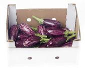 Fresh aubergine, egg-plant isolated on white background — Stock Photo