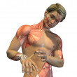 Anatomy Revealed - Stock Photo