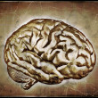 Vintage Brain - Stock Photo