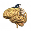 Stock Photo: Brain Reconstruction