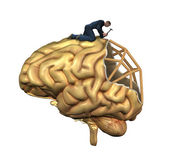 Brain Reconstruction — Stock Photo
