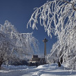 Stock Photo: NiagarFalls Rime Ice Trees 2