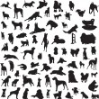 Large collection of different silhouettes of dogs — 图库矢量图片