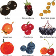 Set of different berries - Stock Vector