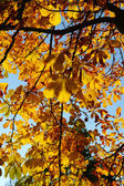 Colorful tree in autumn Berlin — Stock Photo