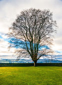 Field,tree and clouds in a blue sky — Stock Photo