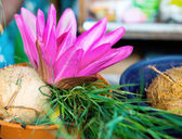 Flower and fruits in indian temple — Stockfoto