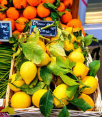 Oranges and lemon with price tags at fruit market — Stock Photo