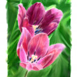Stock Photo: Two flowering tulip