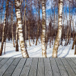 Birch forest — Stock Photo #13178926