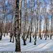 Forest in winter — Stock Photo #13178932