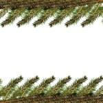 futro drzewo gałąź — Zdjęcie stockowe