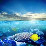Постер, плакат: Under water life