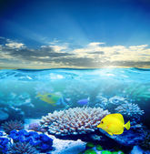 Under water life — Stock Photo