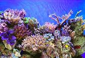 Underwater life — Stock Photo