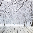 Trees in snow — Stock Photo #17390341