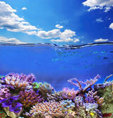 Unterwasser-Leben — Stockfoto