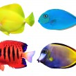 Stock Photo: set of tropical sea fishs