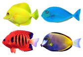 Set of tropical sea fishs — Photo