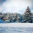Snowy meadow — Foto Stock