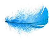 Blue feather — Stock Photo