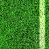 Lined field — Foto de Stock