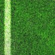 Lined field — Stock Photo #23422990