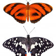 Stock Photo: Two type butterflies