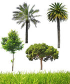 Set of different trees — Stock Photo