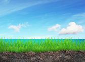 çim ve deniz — Stok fotoğraf