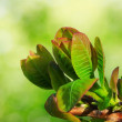 Fresh tree leaves — Stock Photo