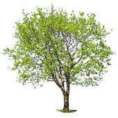 Podzimní strom — Stock fotografie