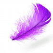 Light blue feather — Stock Photo