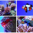Stock Photo: Set of salt water aquarium fish