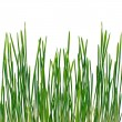 Early grass — Stock Photo