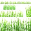 Two rows of green grass isolated on white — Stock Photo
