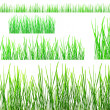 Two rows of green grass isolated on white — Foto de Stock